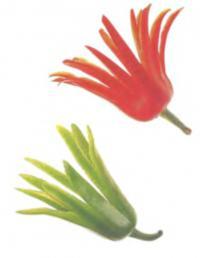 Фото цветочков из чили