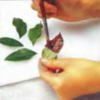 Шаг 4. Нанесение шоколадного слоя на листья