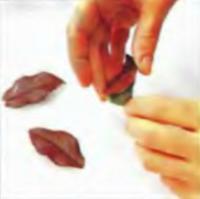 Шаг 7. Отделение шоколада от листьев