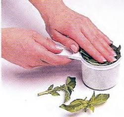 Как отмерить листья базилика