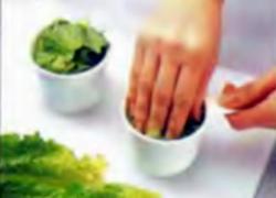 Шаг 6. Упаковка листьев романского салат